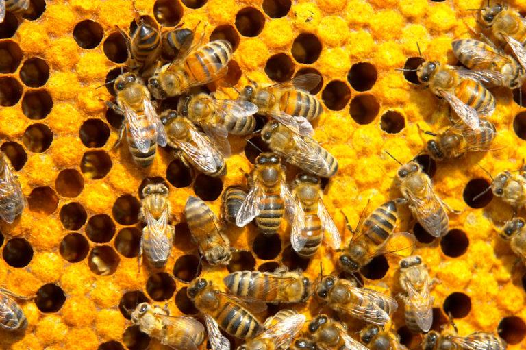 Nurturing Canada's Hive Mind with SR&ED